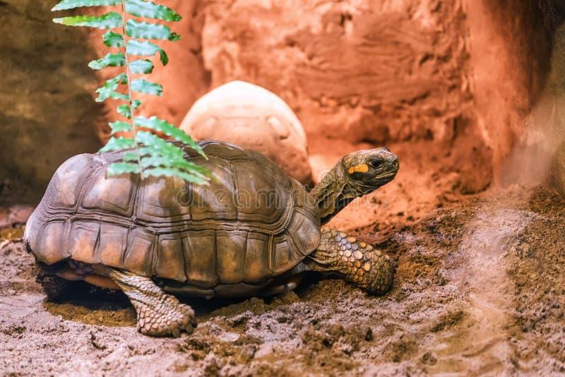 Черепаха нагревает в песке стоковое фото