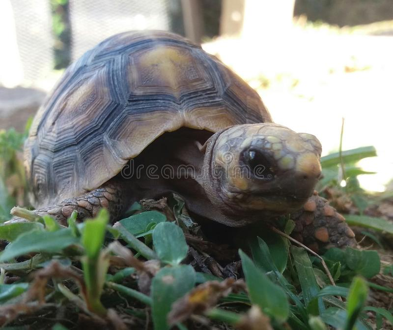 Черепаха над миром стоковые изображения