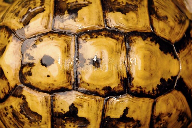 черепаха раковины стоковые изображения rf