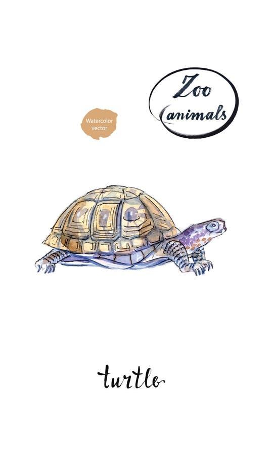 Черепаха черепахи земли в акварели иллюстрация штока