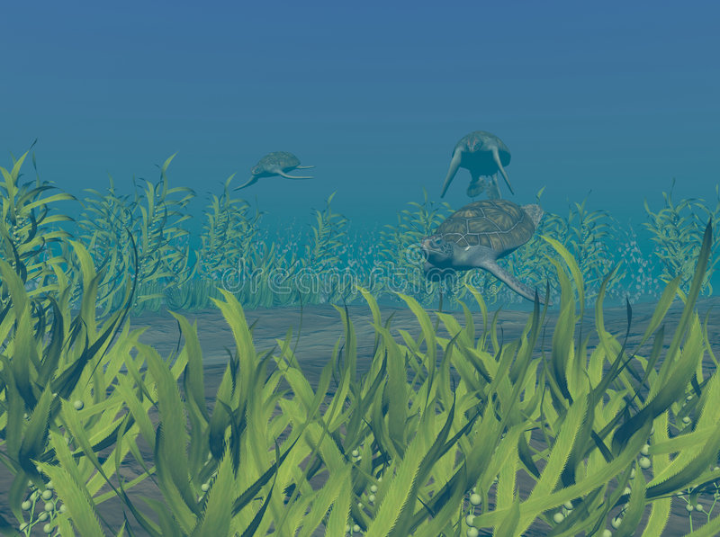 черепахи зеленого моря стоковая фотография rf
