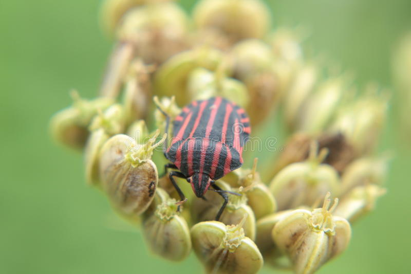 Черепашка макроса стоковое изображение