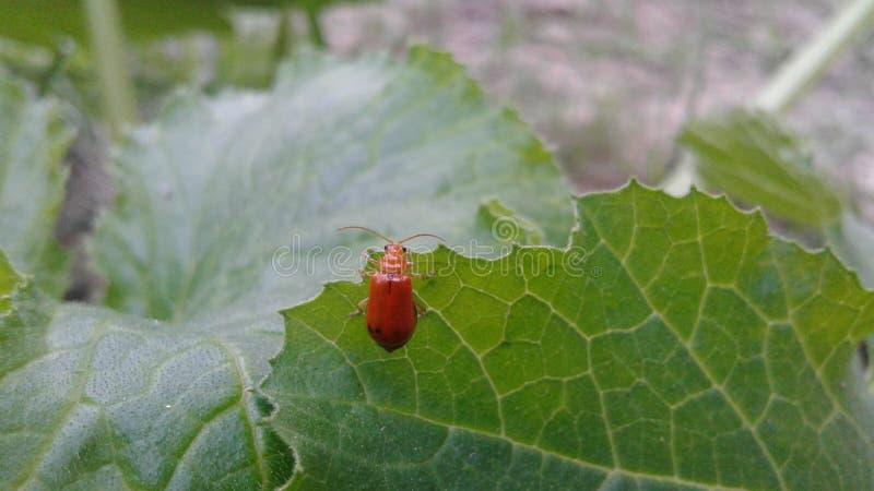 Черепашка Ladybird стоковое фото