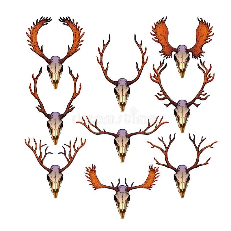 Черепа женских и мужских оленей с antlers иллюстрация штока