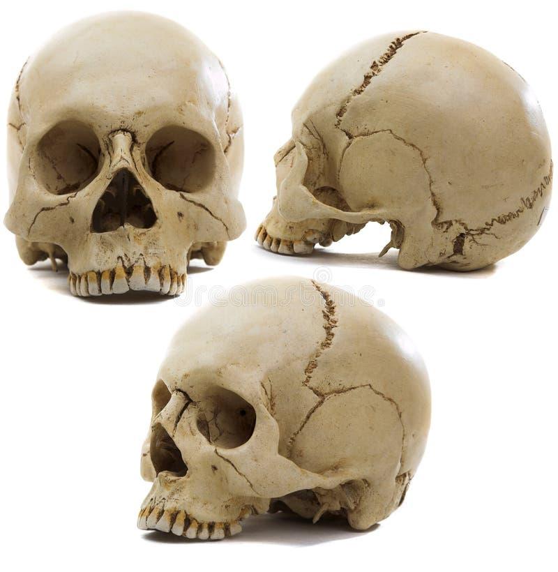 черепа стоковое изображение rf