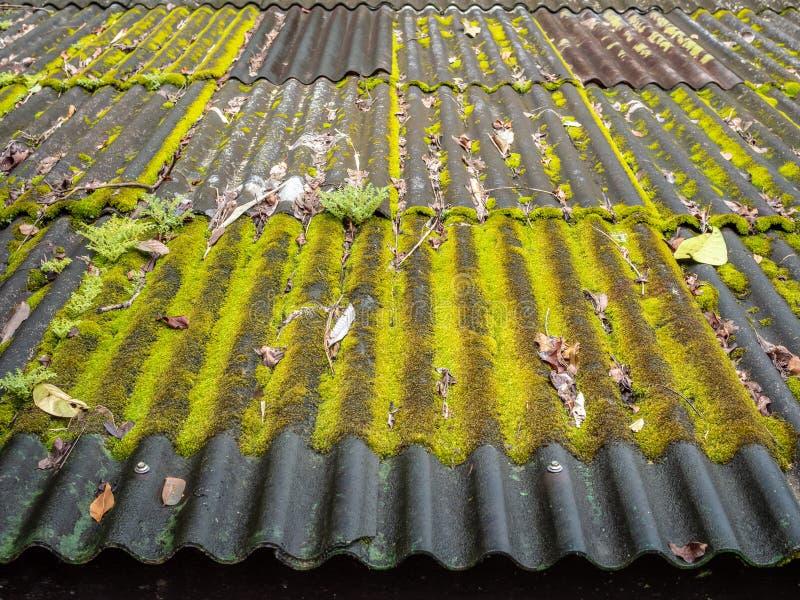 Черепица покрытая с зеленым мхом стоковая фотография rf