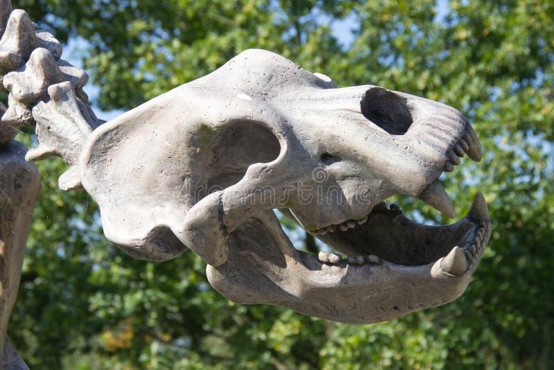 Череп доисторического животного стоковое изображение rf