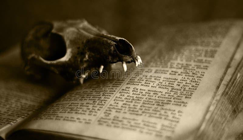 череп животной библии старый стоковые фотографии rf
