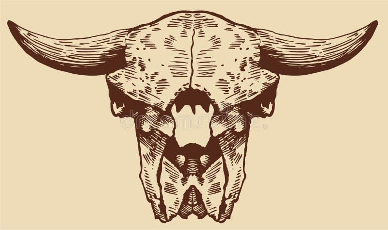 череп зубробизона иллюстрация штока