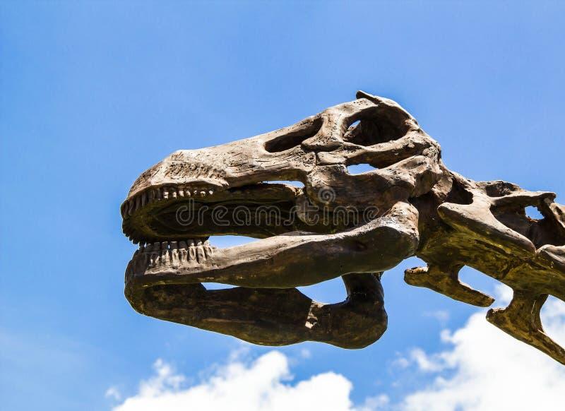 Череп динозавров головной с голубым небом стоковое фото rf