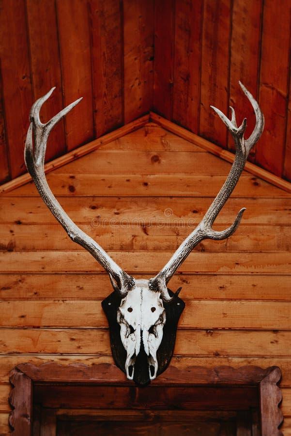 Череп лося с большими antlers на старой, деревенской деревянной кабине в s стоковое фото