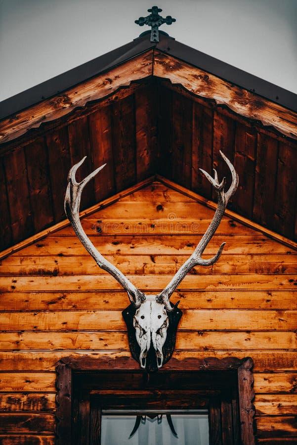 Череп лося с большими antlers на старой, деревенской деревянной кабине в s стоковое изображение