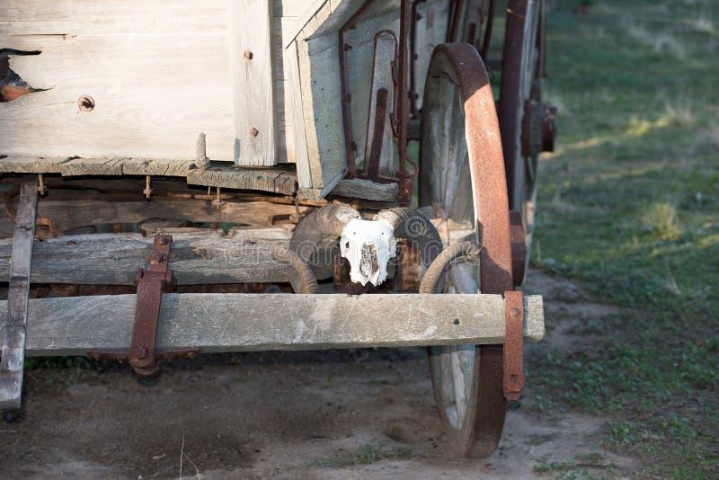 Череп овец на значительно западной фуре стоковое изображение