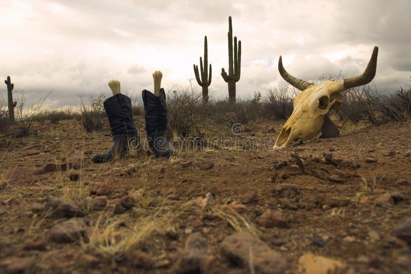 череп пустыни ботинок стоковые фотографии rf