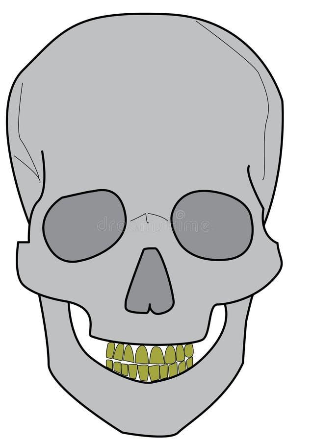 череп иллюстрация вектора