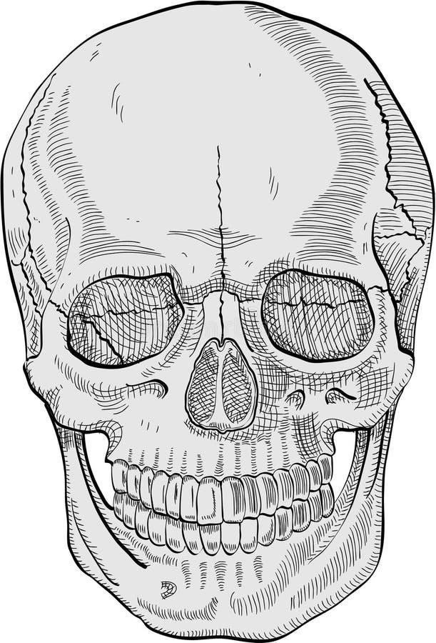 череп бесплатная иллюстрация