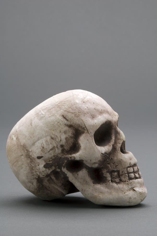 Download череп стоковое изображение. изображение насчитывающей сулой - 6859933