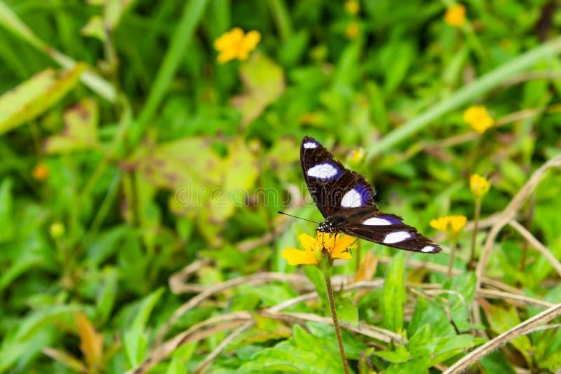 Черная бабочка на желтом цветке в траве стоковое изображение rf