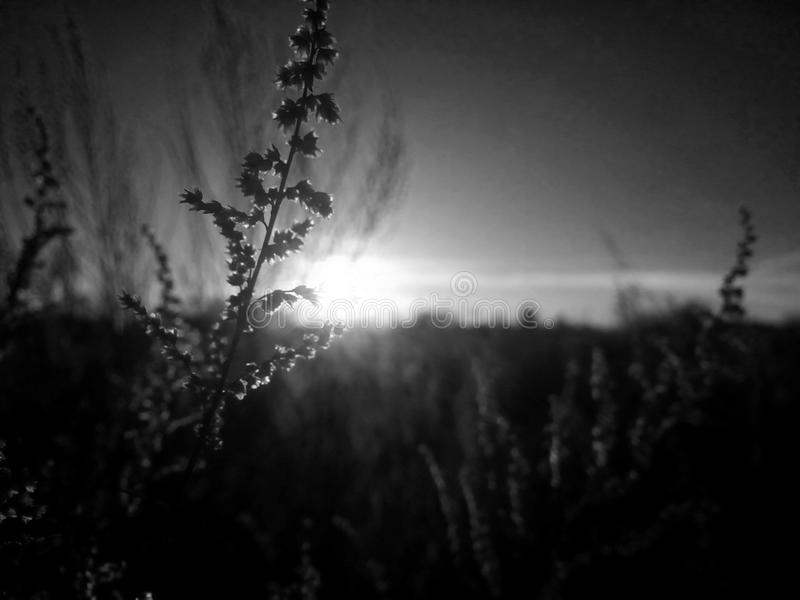 черная белизна стоковые фотографии rf