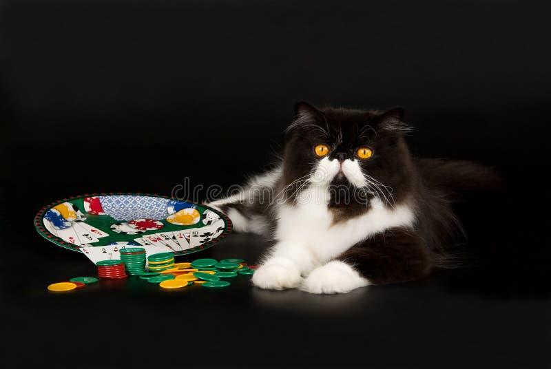 черная играя в азартные игры перская белизна темы стоковая фотография