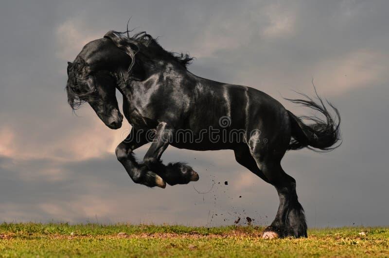 черная лошадь friesian