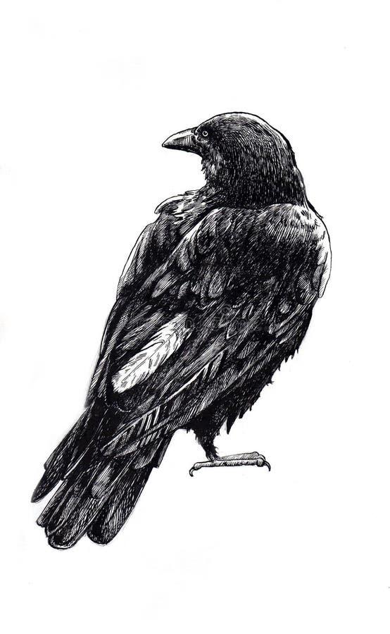 Черная нарисованная рука ворона стоковое изображение