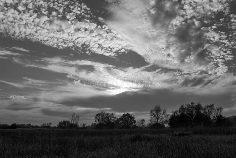 черная природа стоковое фото