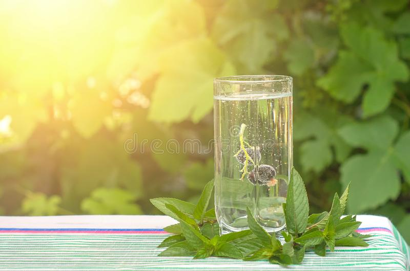 Черная смородина в стекле минеральной воды, листьев мяты стоковое изображение rf