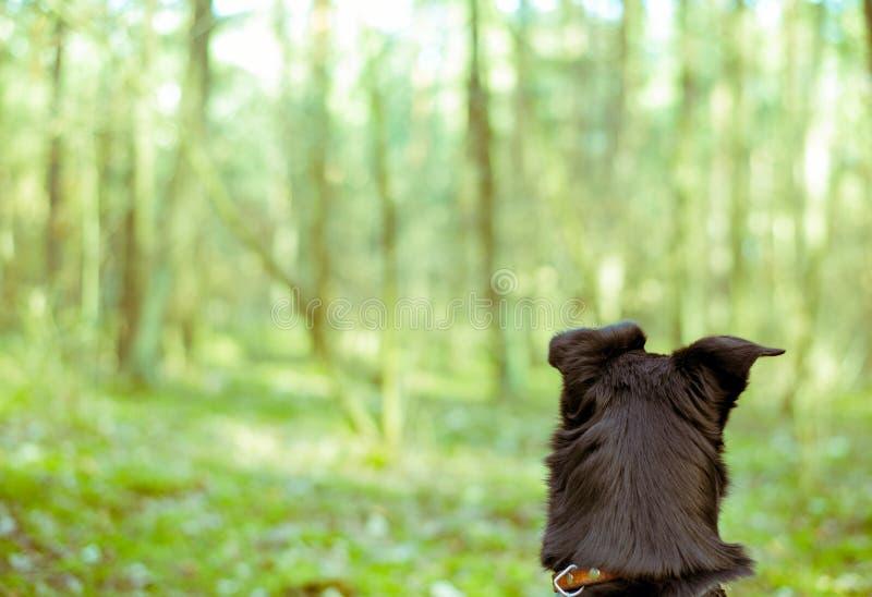 Черная собака в зеленом лесе стоковые фотографии rf