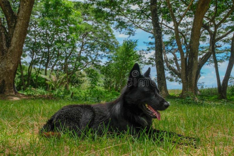 Черная собака в лесе стоковые изображения