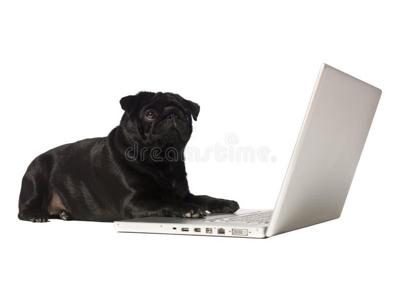 черная собака компьютера стоковые изображения rf