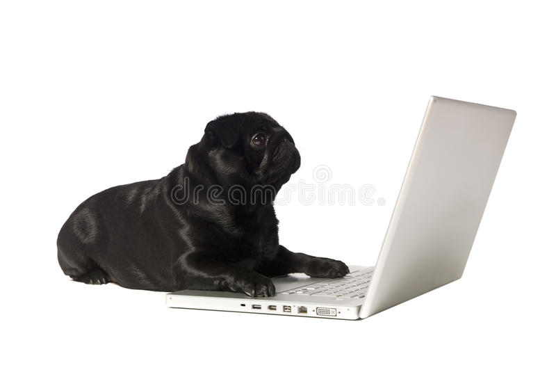 черная собака компьютера стоковые фотографии rf