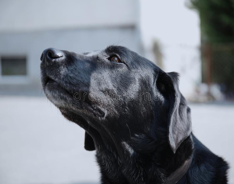 Черная собака с начинать выше стоковое фото