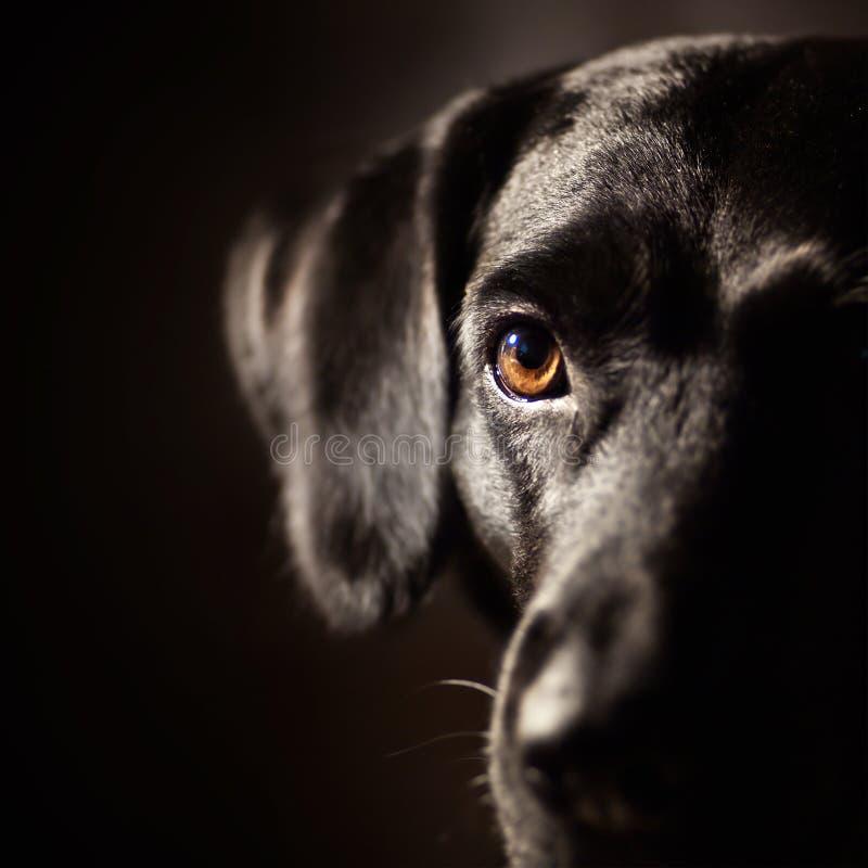 черная собака стоковые фото
