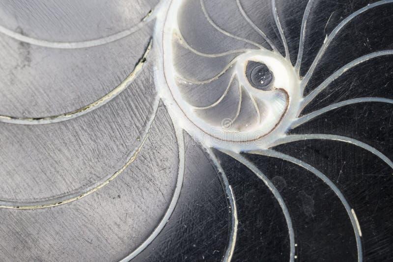 Черная текстура раковины свирли стоковые фото