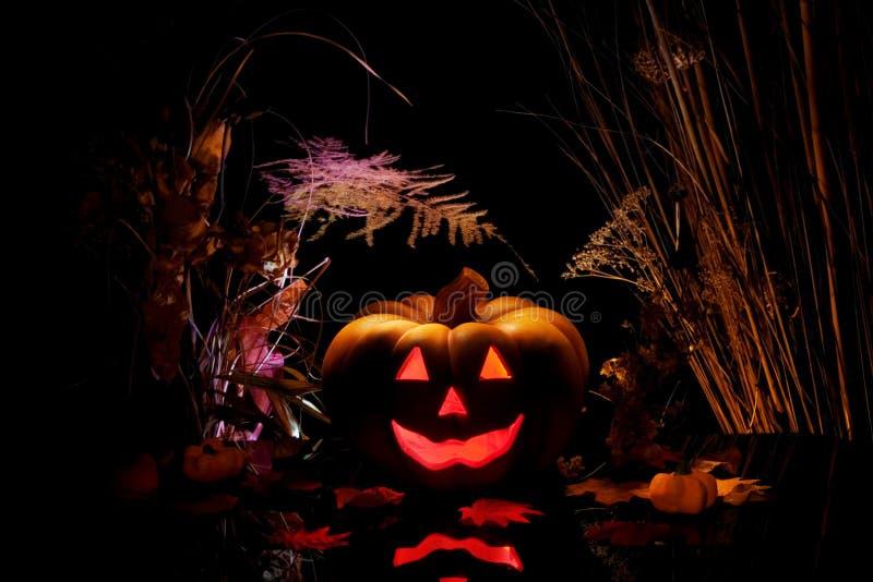 черная тыква halloween стоковые фотографии rf