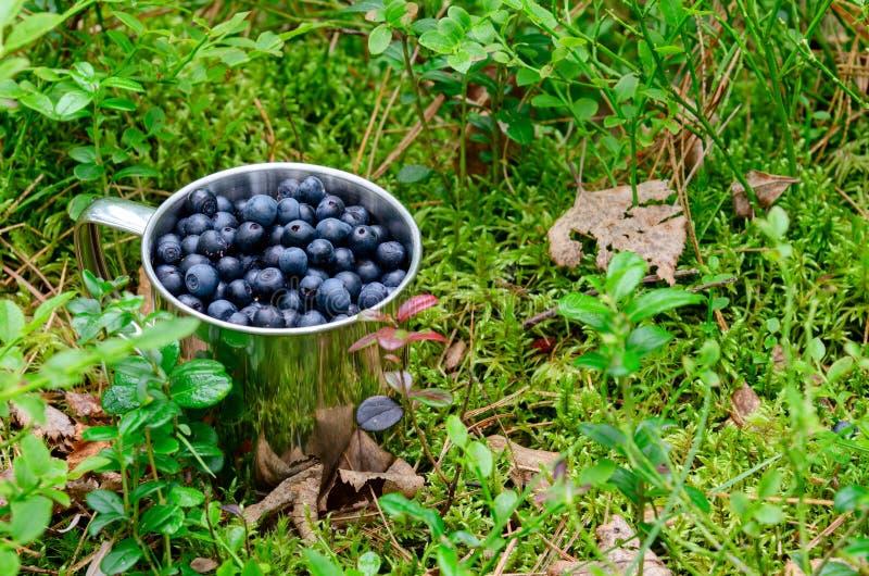 Черника в чашке в чернике леса свежей в чашке на том основании в лесе стоковое фото