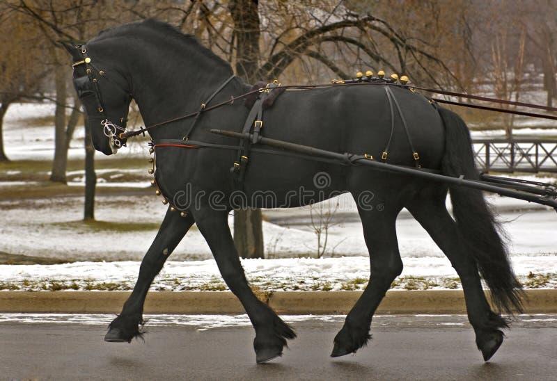 Download черное движение нерезкости вытягивая некоторого жеребца Стоковое Фото - изображение насчитывающей ebony, конноспортивно: 485708