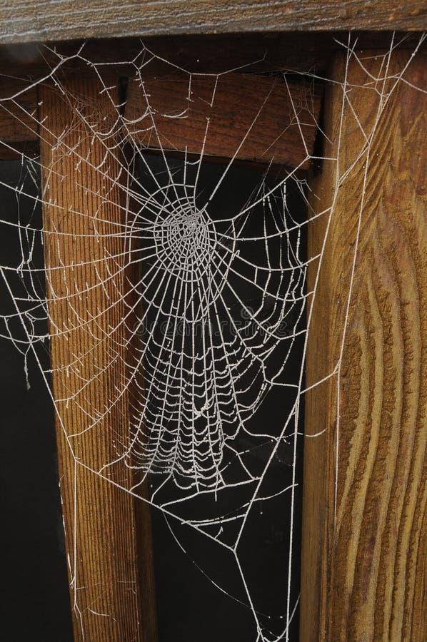 черное, котор замерли изолированное spiderweb стоковое фото rf