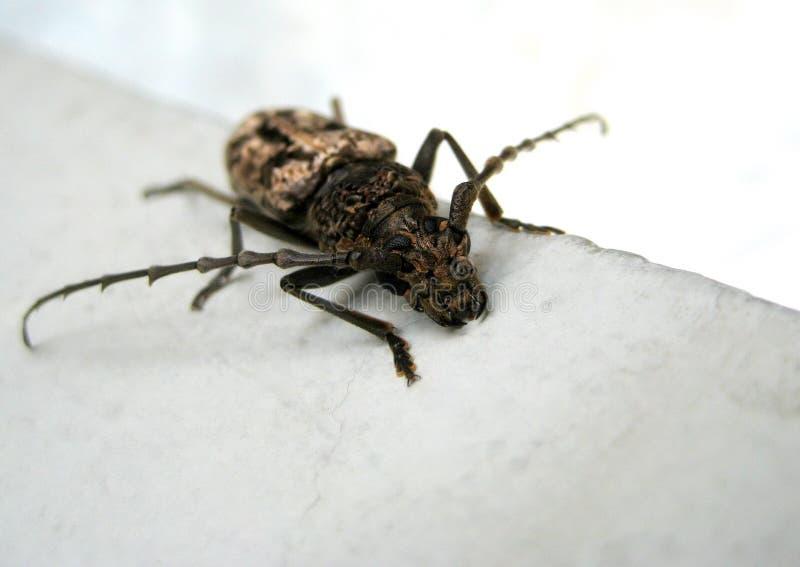 Черное насекомое стоковое фото