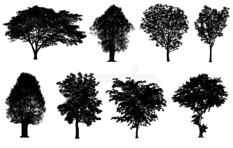 Черное собрание силуэтов дерева изолированное на белой предпосылке бесплатная иллюстрация