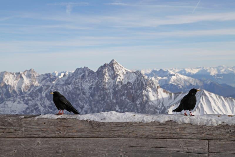 Черное garmisch Германия ландшафта голубого неба зимы лыжи снега горы горных вершин zugspitze птицы стоковые изображения