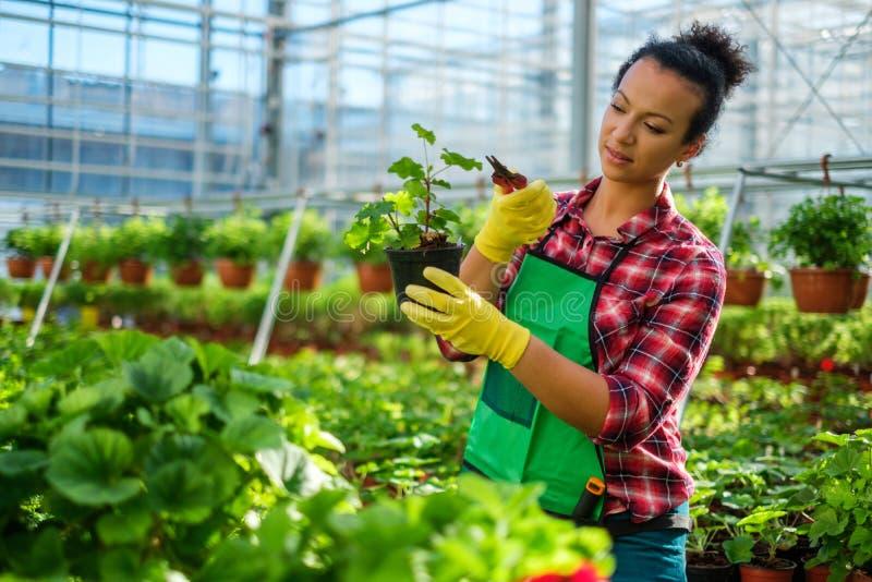 Чернокожая женщина работая в ботаническом саде стоковое фото rf