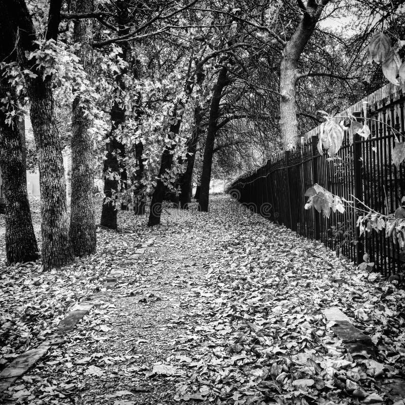 Чернота в белом пути падения стоковые изображения