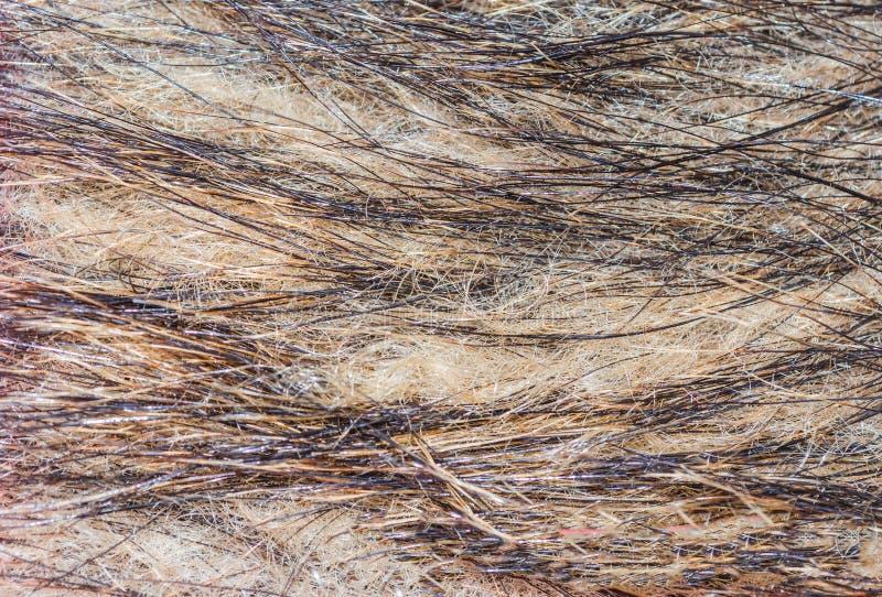 Чернота животной текстуры меха серая стоковая фотография