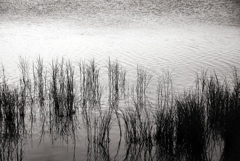 чернота засевает белизна травой стоковое изображение