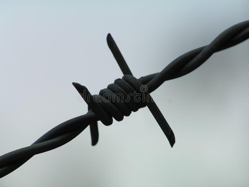 чернота колючки стоковое фото rf