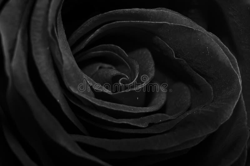 чернота подняла стоковые изображения rf
