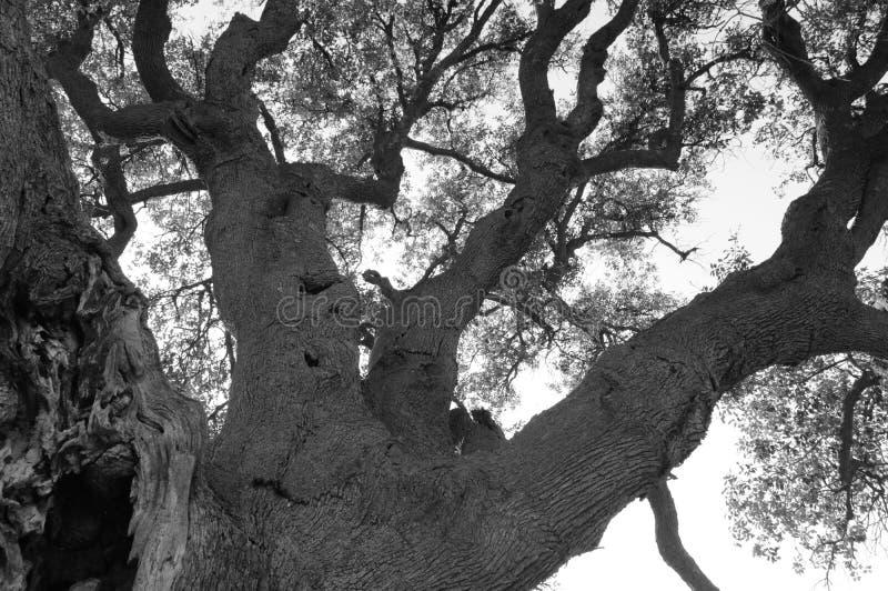 Чернота природы ветвей дерева и стоковая фотография