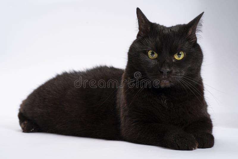 Чернота удивила оглушенного кота на белой предпосылке o стоковые изображения
